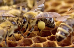 2. díl Včelaření na Plavské