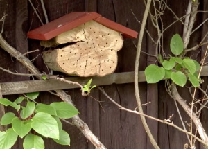 Petra Pomijová - Včelky samotářky