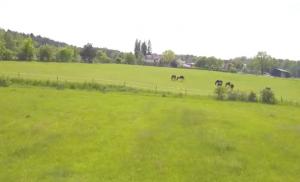 Koně a krajina okolo nás