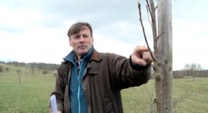 Jak správně sázet stromy