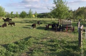 Prohlídka farmy Hůrka 1. díl Ovečky