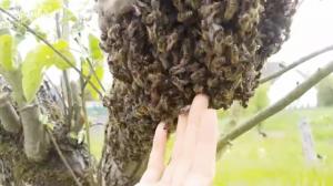 Rojení včelstev