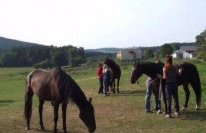 Koňská poradna