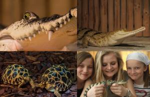 Návštěva v krokodýlí ZOO